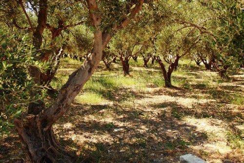 Талисманы и амулеты для знака зодиака весы: камни, деревья