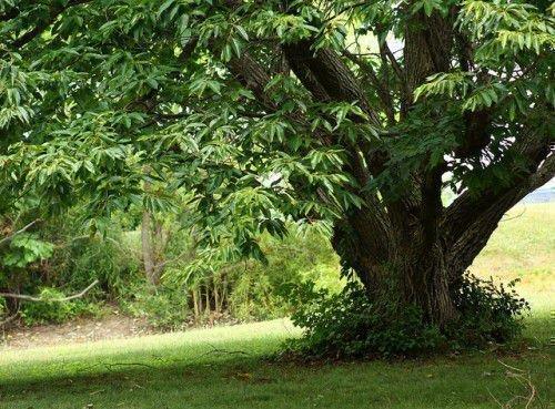 Знак зодиака Телец: талисманы и амулеты камни, цветы, деревья