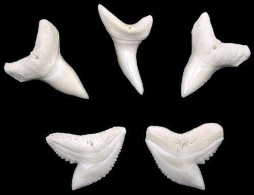 Что означает амулет из зуба акулы
