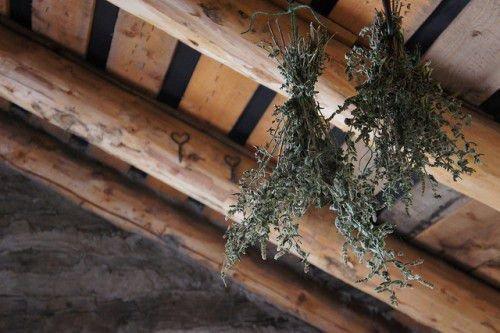 Как выбрать растение – оберег