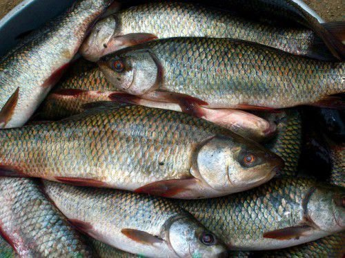 Заговор на удачную рыбалку и клев, молитва перед ловлей рыбы