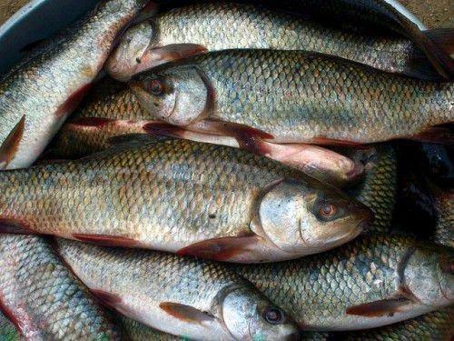 Молитва на удачную рыбалку