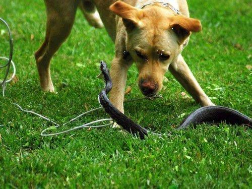 Змея на участке