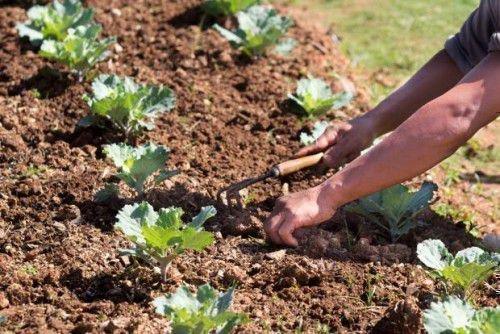 Ухаживать за огородом
