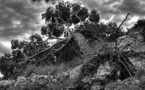 Поваленое дерево