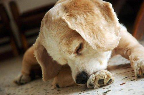 Заговоры для лечения животных: от болезней глаз у собак
