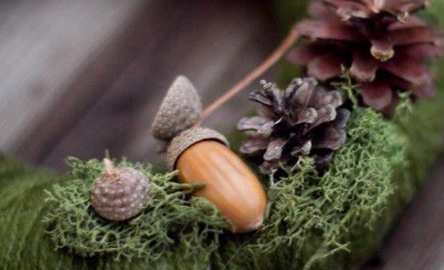Жолуди и мох