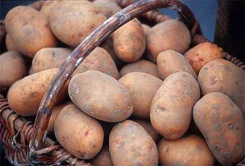 Картофель главная культура на огороде