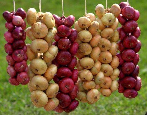 Рассорки на луковицу и другие полезные заговоры на лук