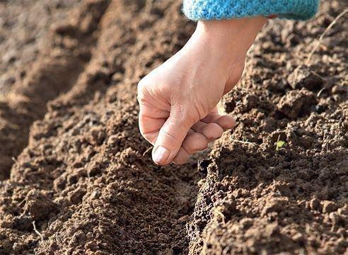 Молитва поможет вырастить богатый урожай на огороде