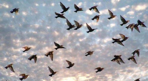 Шепотки на стаю птиц
