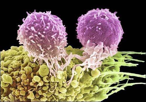 Рак является злокачественной опухолью. Его можно постараться побороть с помощью магии.