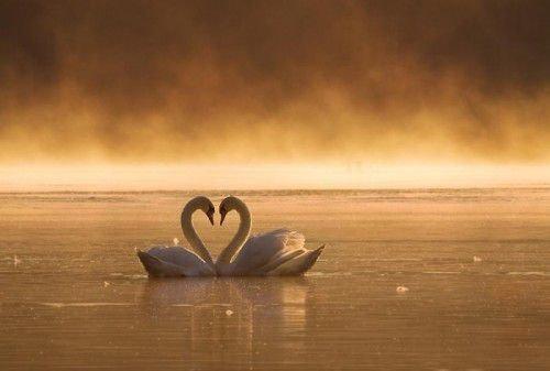 Как узнать о предстоящей любви