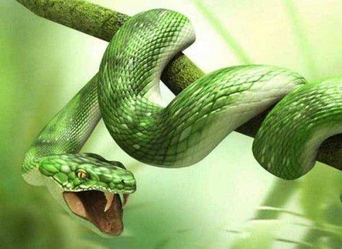 Дружба закончится, если Змея начнет ревновать