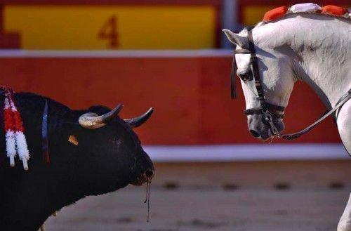 Характеристики Быка и Лошади существенно отличаются
