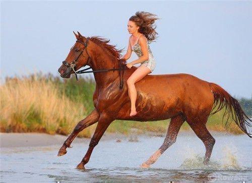 Лошади – лидеры и завоеватели