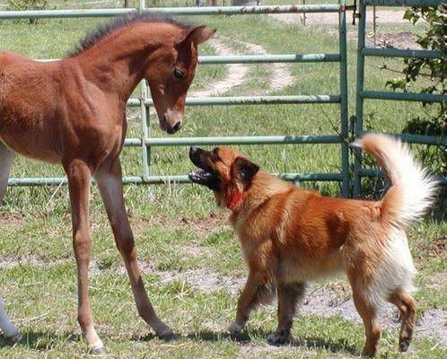 Раскованный характер лошади и экономность собаки создает крепкий союз