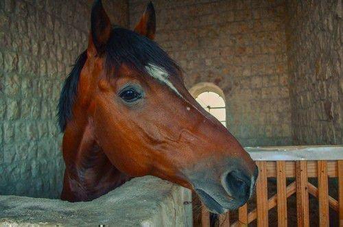 Лошадь по гороскопу