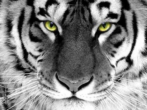 Тигр и Кролик: совместимость в любви, браке по гороскопу