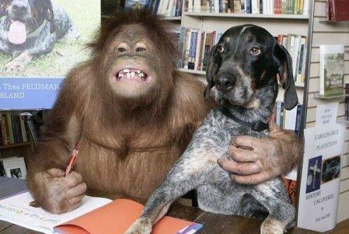 Обезьяна и Собака: совместимость в любви, браке, дружбе по гороскопу