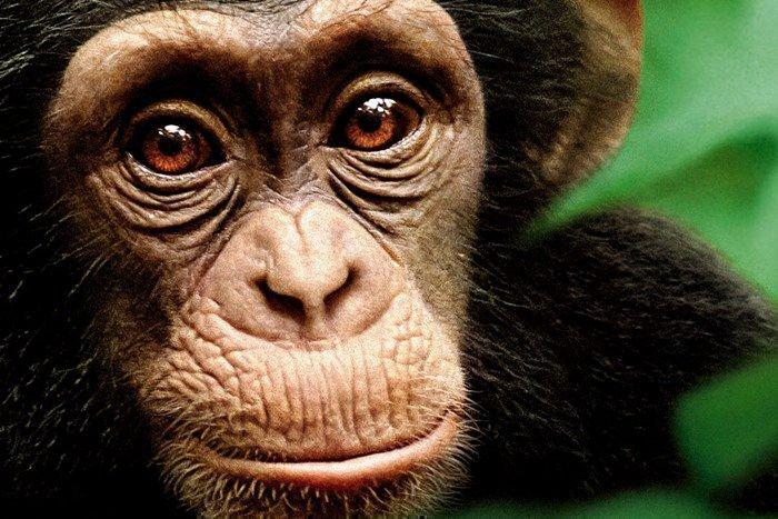Гороскоп совместимость кота с обезьяной