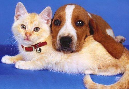 Кролик и Собака: совместимость в браке, любви по гороскопу