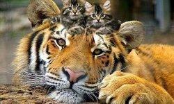 Гороскоп Тигр И Огненная Змея Совместимость
