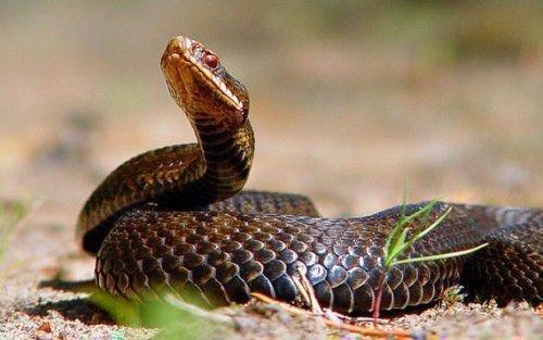 Петух и Змея: совместимость в любви, браке по гороскопу