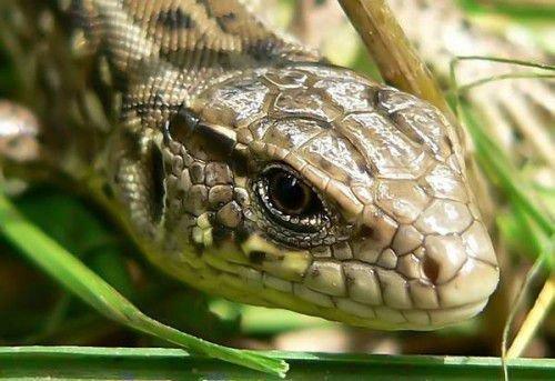 Змея и Кролик: совместимость в любви, браке по гороскопу