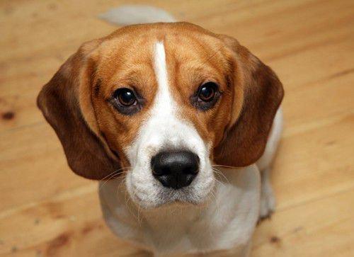 Собака и Собака: совместимость в любви, браке, дружбе