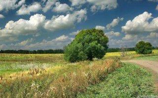 Природа в августе
