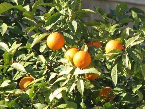 Обряд с апельсинами
