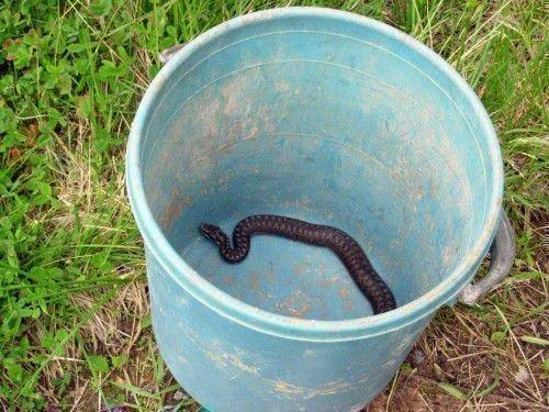 Заговор от укуса змеи