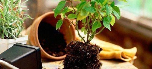 Дерево для успешной торговли