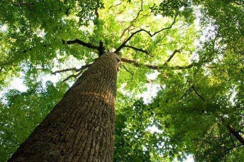 Деревья хорошо вытягивают злую энергию.