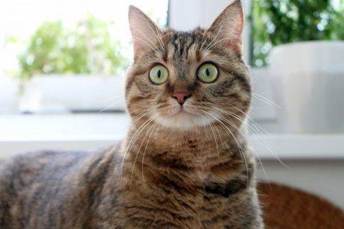 Кошка защищает дом от злых сил
