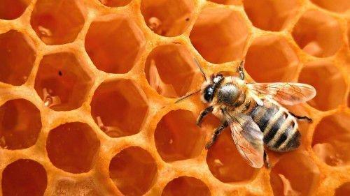 Нативный пчелиный воск поможет диагностировать наличие порчи