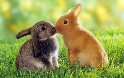 Кролик часто выступает, как источник вдохновения для партнера