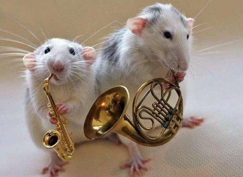 Крыса любит шик, блеск, дорогую еду