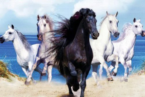 Лошади прекрасные компаньоны и собеседники