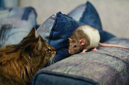 Мужчина-кот/кролик неустойчивая личность