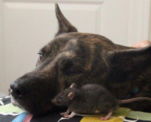 Собака и Крыса поддерживают друг друга