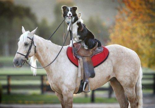 Собака и Лошадь понимают друг друга