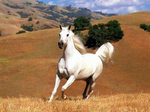 У мужчины-Лошади необузданный темперамент