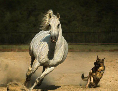 У Собаки и Лошади одна цель
