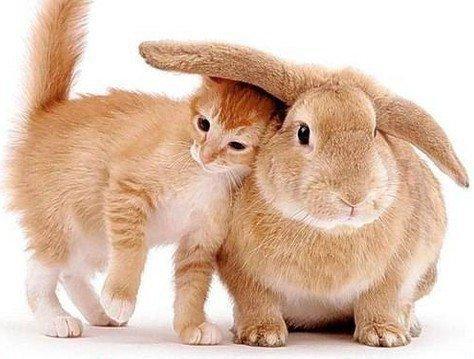 Женщина-кролик/кот очень эмоциональна и тороплива