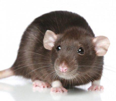 Женщина -Крыса боится бедности