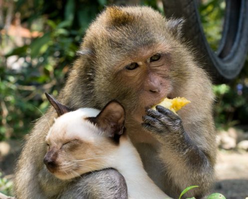 Кот и обезьяна